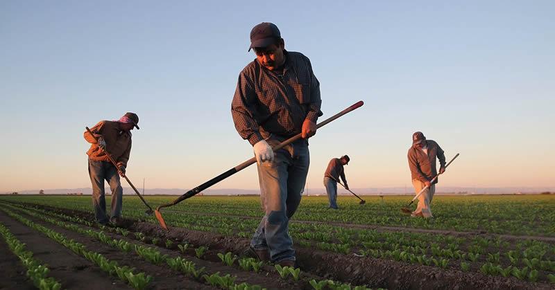 Quem tem direito a Aposentadoria Rural